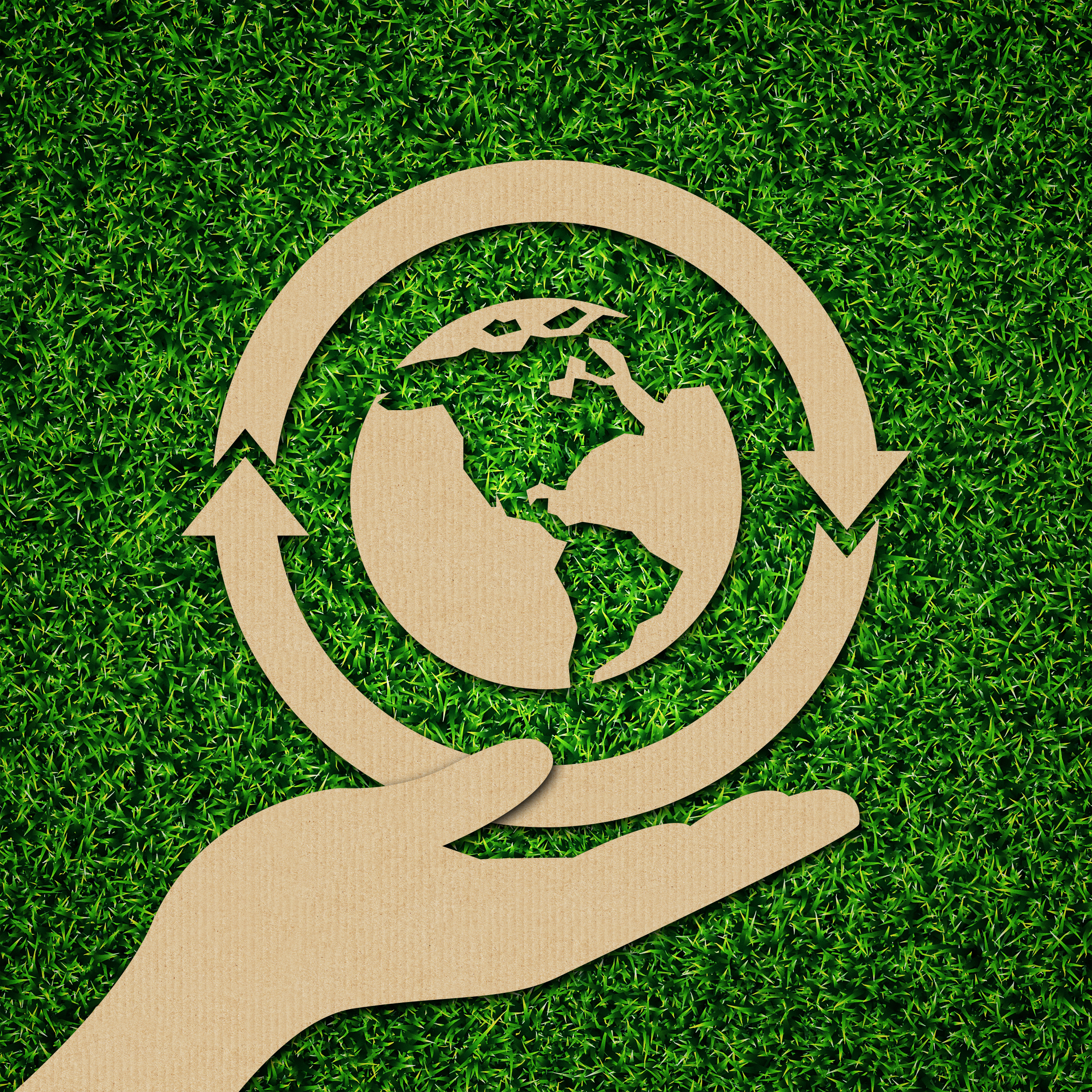 cartón, propuesta ecológica para packaging